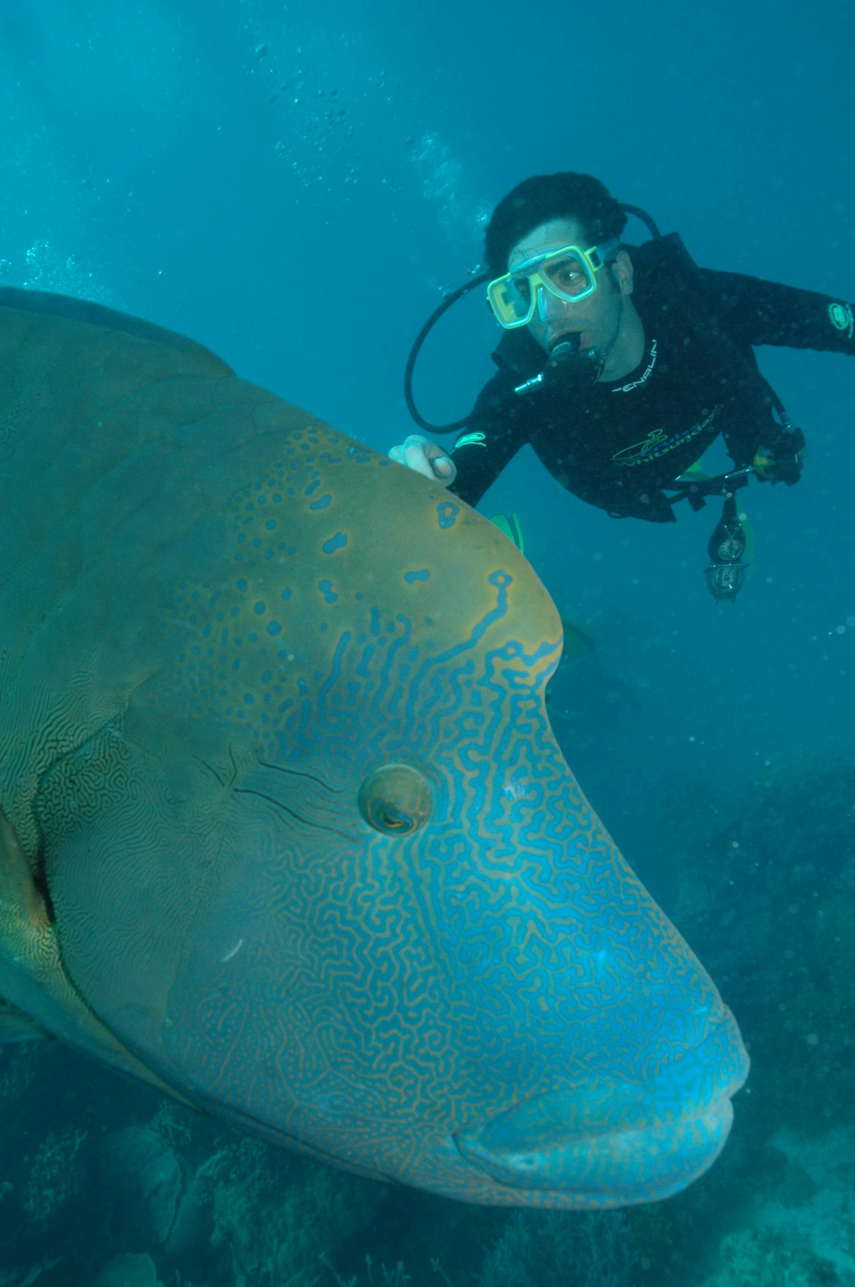 Scuba diving on the Great Barrier Reef, Australia, 2008