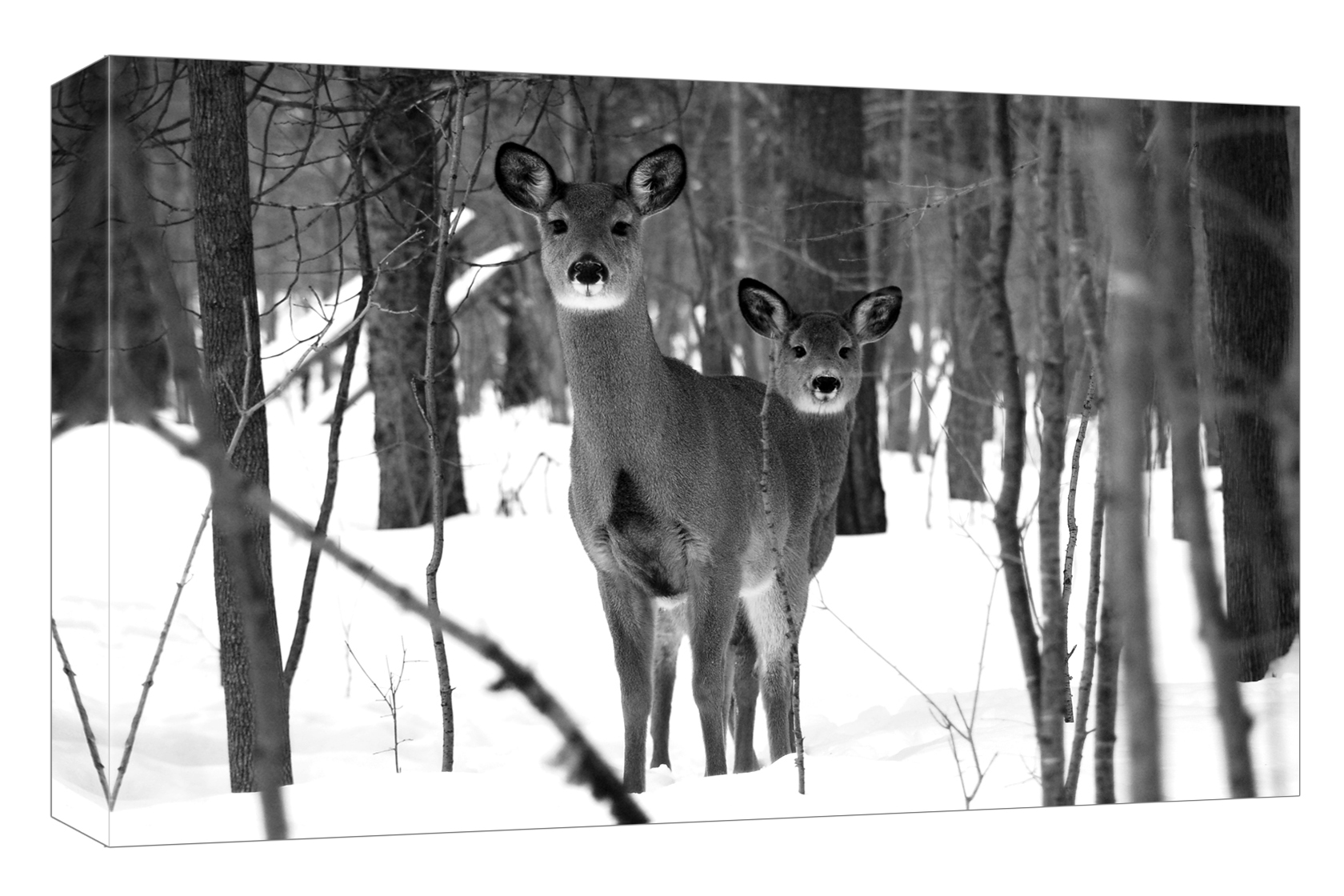 Whitetail Deer, West Greenbelt, February 2014, 18 x 12, $200. Photo: Amanda Sage