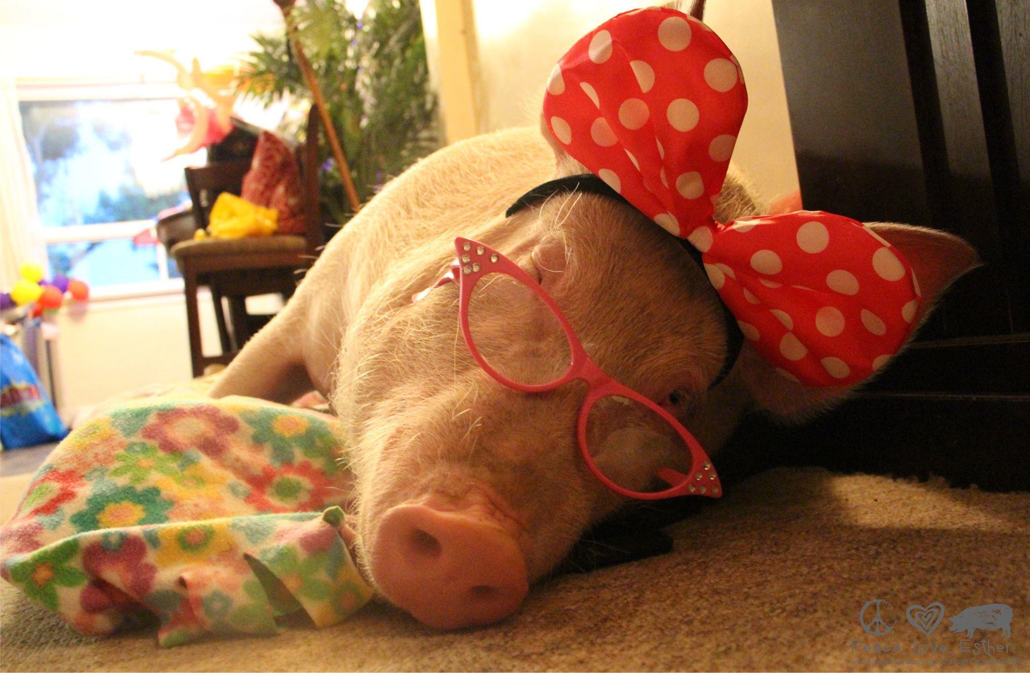 Steve Jenkins, Derek Walter and Esther the Wonder Pig · Kickass