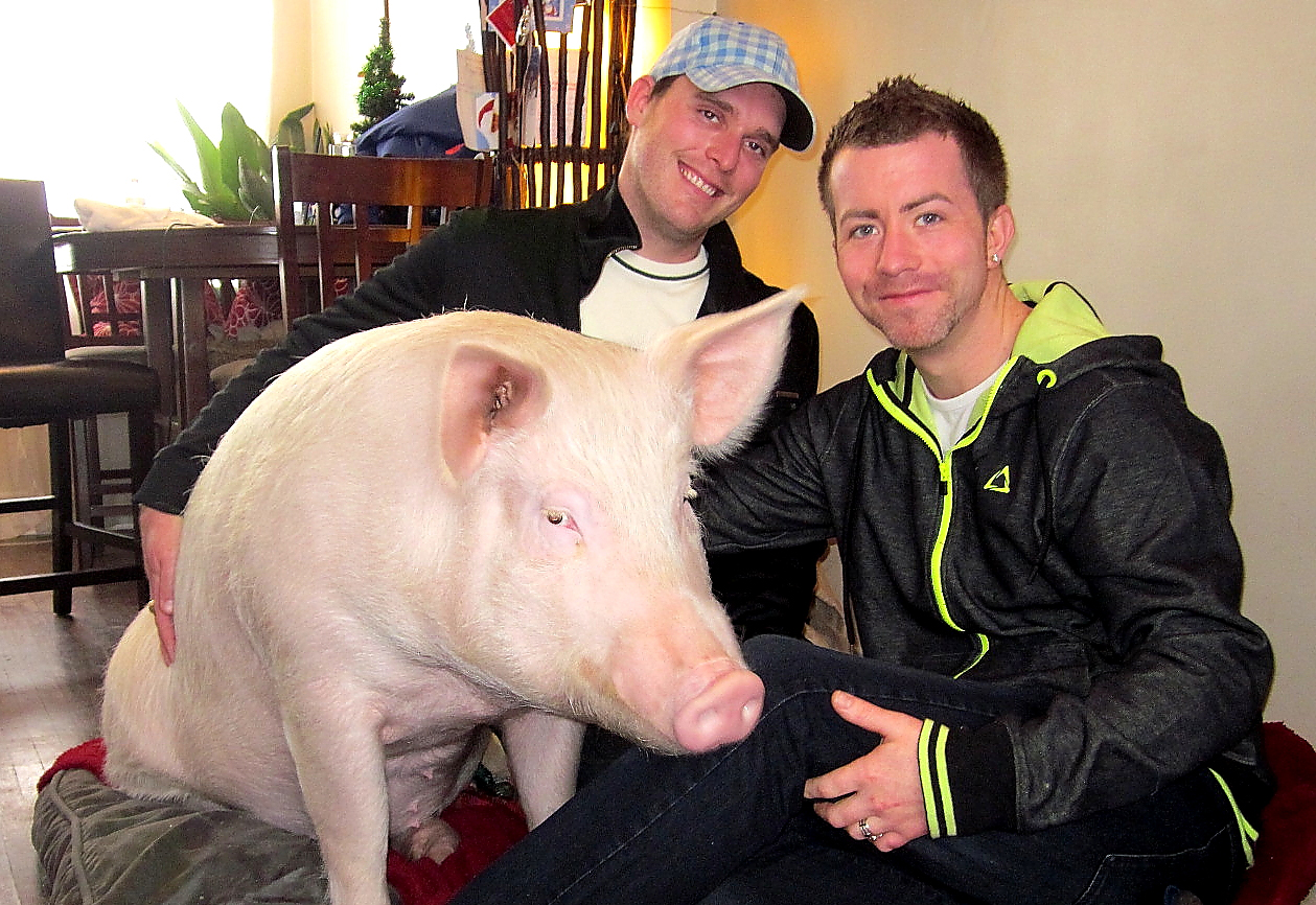 Steve, Derek and Esther the Wonder Pig