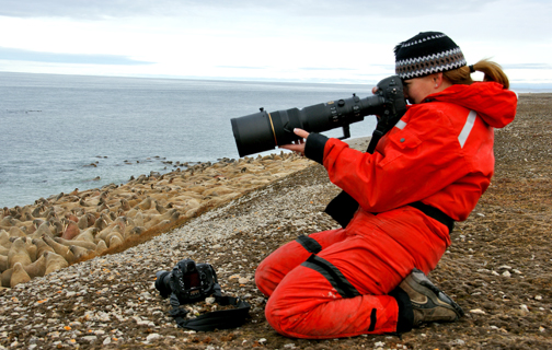 Photographing walruses, Hall Beach, Nunavut, Photo: Patricia MacPhail